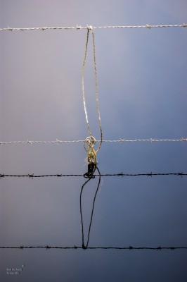 Rob Verhoek Fotografie, reflectie in het water
