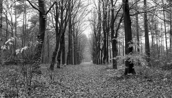 Rob Verhoek Fotografie, bos in zwart wit